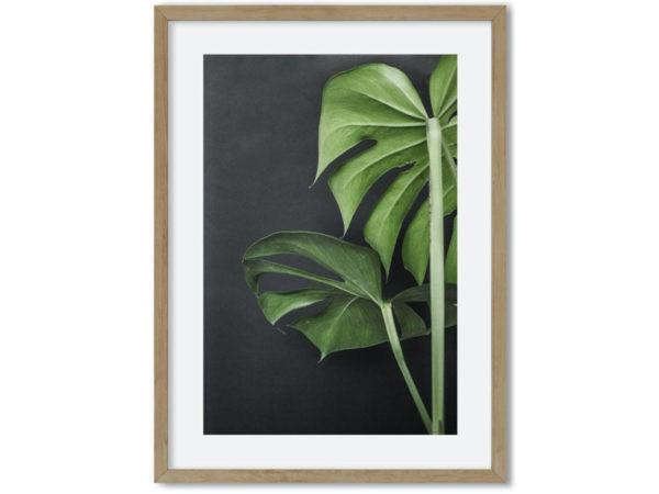 Plant bladeren