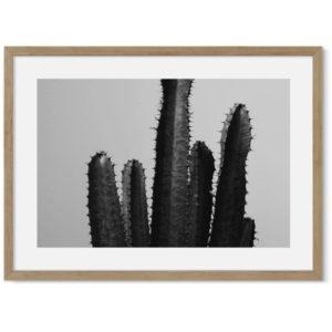 Cactus poster 2