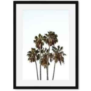Palmbomen poster