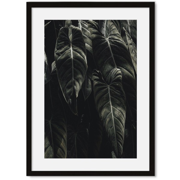Planten Poster