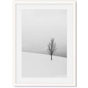 Poster boom in de sneeuw