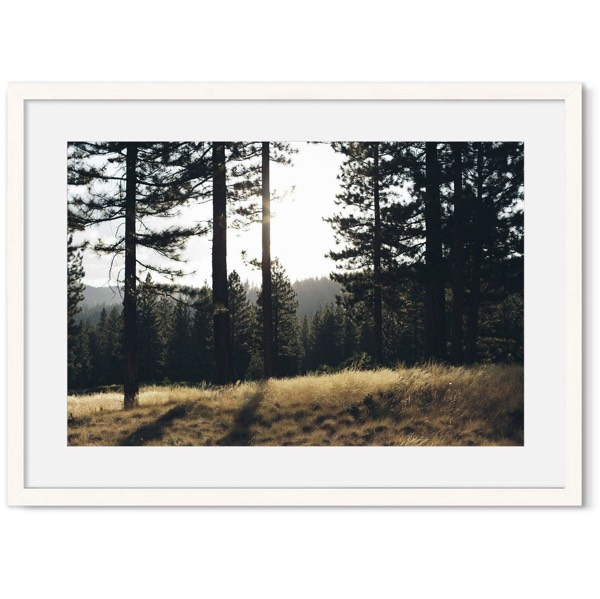 Poster van bos muur