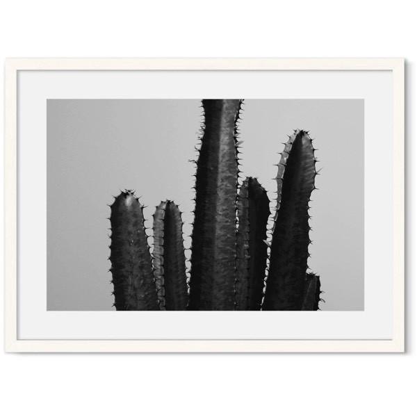Poster van een cactus