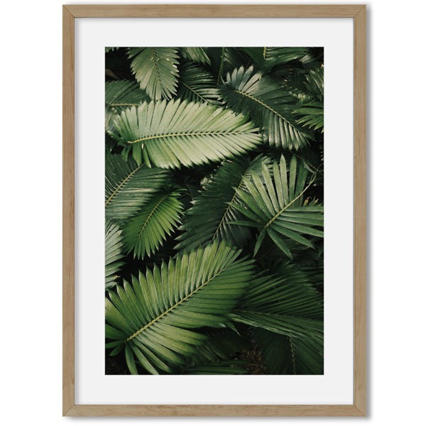 Poster van jungle