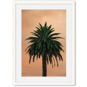 Poster van palmboom 2