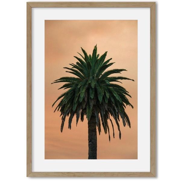 Poster van palmboom 3