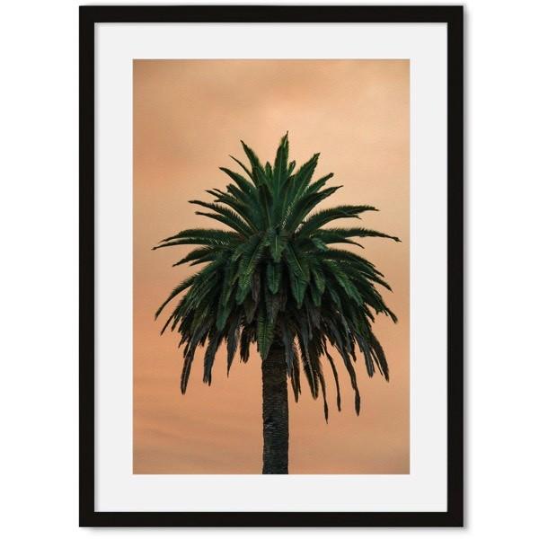 Poster van palmboom