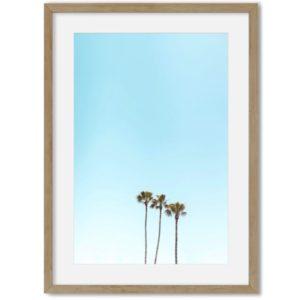 poster palmbomen