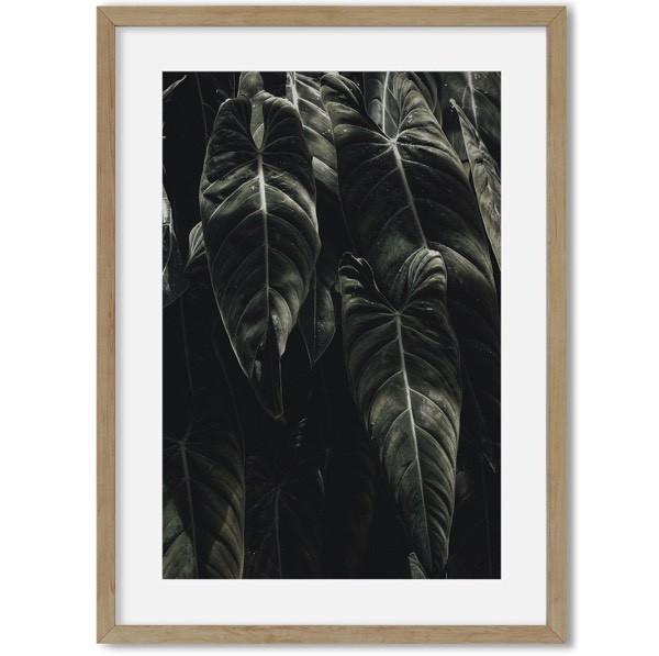 poster planten